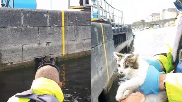 WATCH: Athlone snorkeler rescues kitten from lock chamber in River Shannon