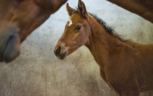 PIC: Dublin Fire Brigade and volunteers rescue a foal from the canal