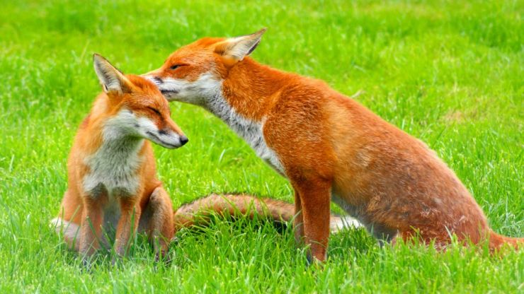 PIC: The funniest wildlife photo of the year has been revealed