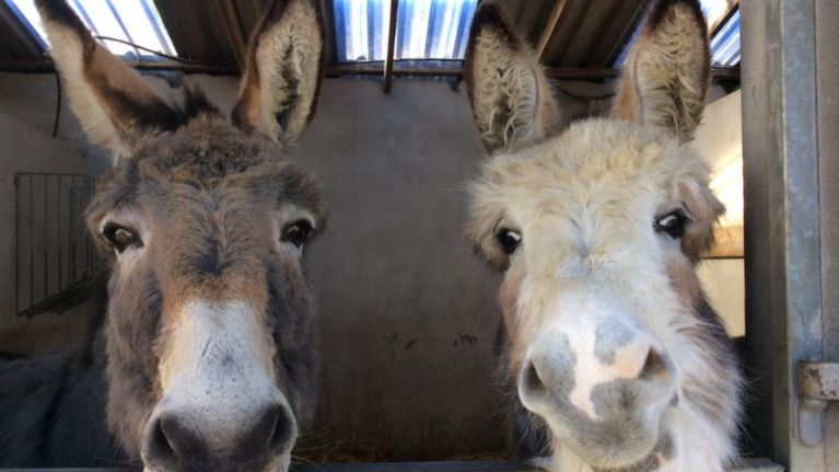 """Please help us reach our goal"" - Donegal Donkey Sanctuary issues winter feed appeal"