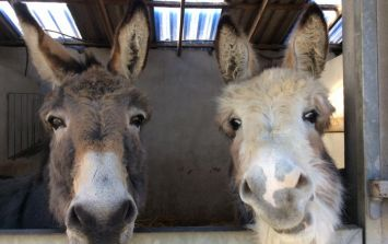 """""""Please help us reach our goal"""" - Donegal Donkey Sanctuary issues winter feed appeal"""