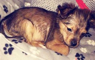 Two men arrested after puppy allegedly beaten with hammer and put into microwave