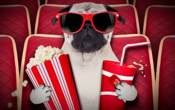 Various cinemas around the UK are hosting dog-friendly film screenings