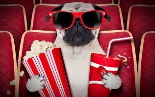 Various cinemas around the UK are hosting dog-friendly film screenings