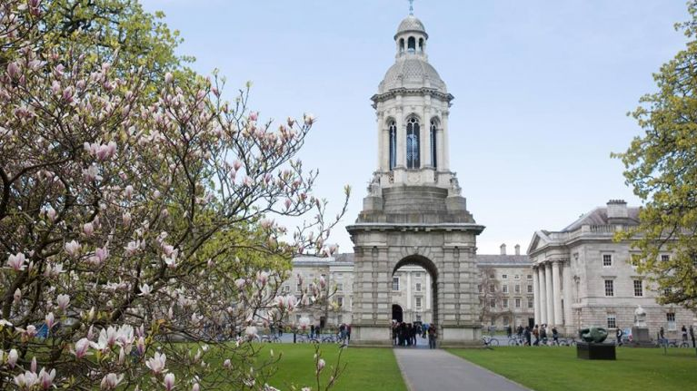 PIC: One of Trinity College's most iconic trees came crashing down last night