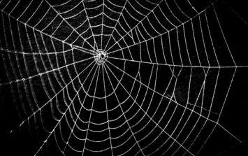 Car dealer in Cavan opens bonnet of newly-delivered car to find massive spider inside