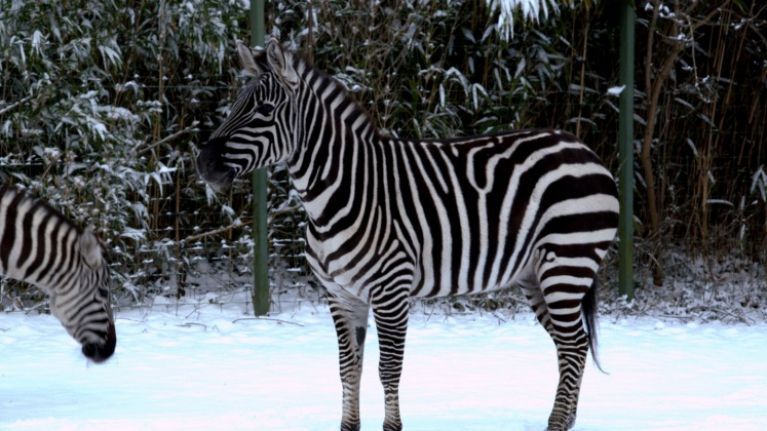 PICS: The animals at Dublin Zoo really enjoyed their day in the snow