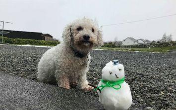 PICS: Is this Ireland's smallest snowman?