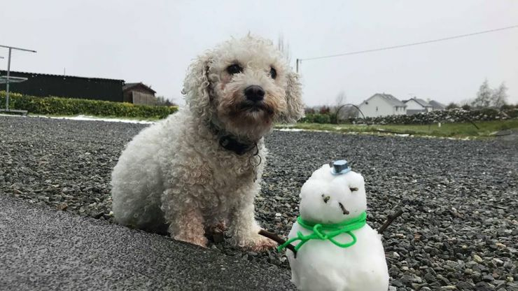 PICS: Is this Ireland's smallest snowman?