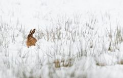 "Met Éireann forecast ""wintry falls"" and ""frosty nights"" as cold Easter beckons"