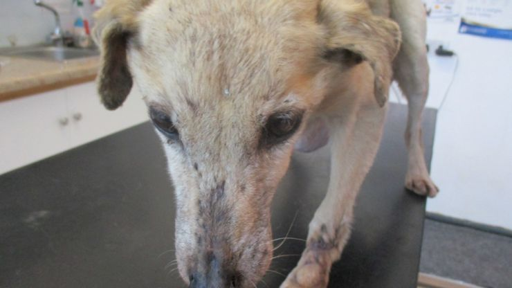 Kildare man convicted of cruelty to a dog that had to be euthanised on humane grounds (Warning: Graphic content)