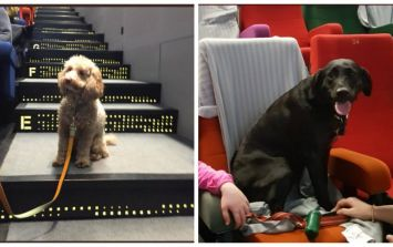 PICS: This Dublin cinema held a dog-friendly screening of Isle Of Dogs and it is a cuteness overload