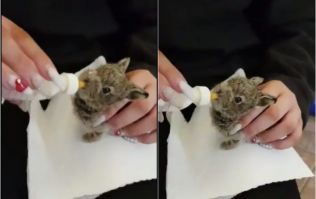 Despite valiant efforts to save her – Dublin Airport's Hare Emma has passed away