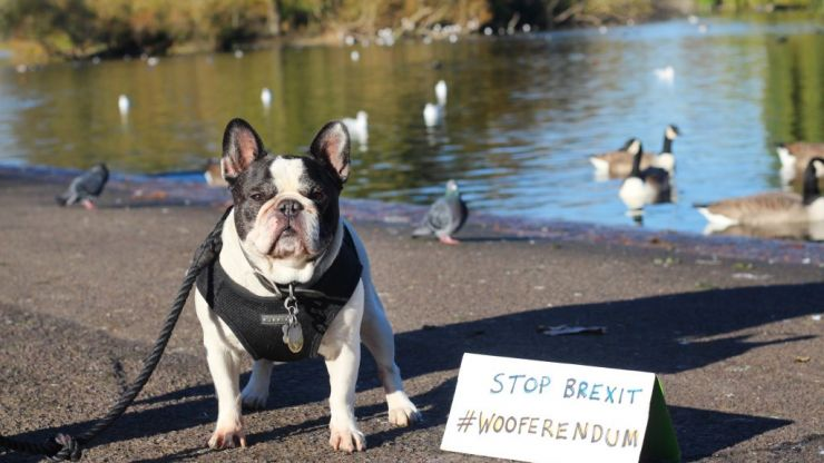 Thousands of dogs will march on Westminster this weekend to protest Brexit