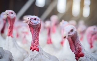 Dunnes Stores issues recall of turkey slices