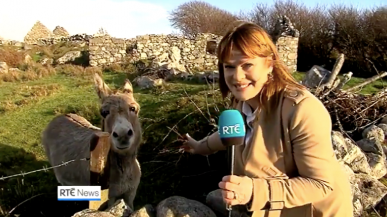We absolutely love Teresa Mannion's news report on viral singing donkey in Galway