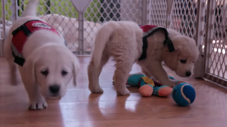 Netflix have made a documentary series all about dogs and our deep friendship with them