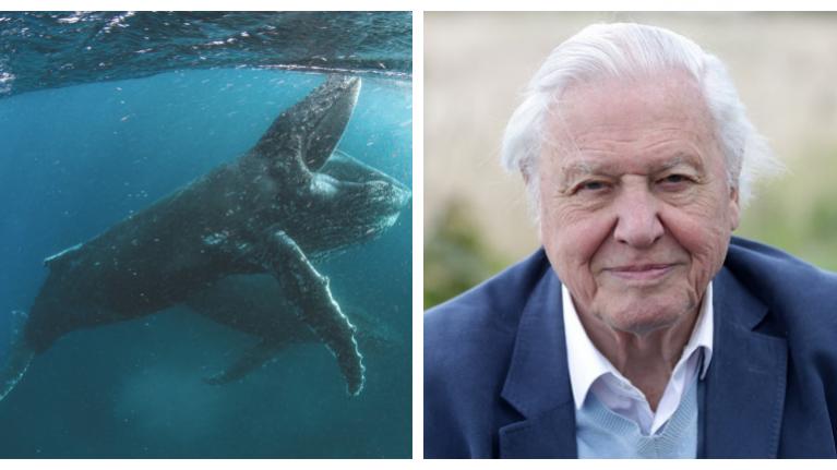 David Attenborough's new nature documentary series on Netflix looks spectacular