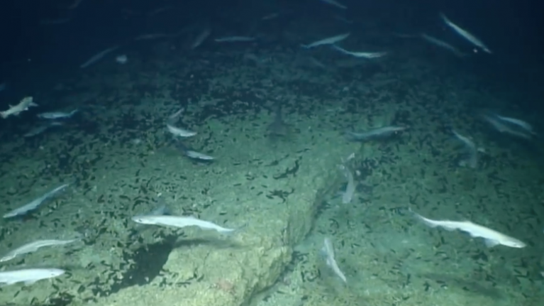 WATCH: A rare shark nursery has been found off the coast of Ireland