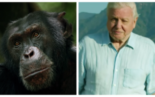David the chimp from Attenborough's Dynasties documentary was found beaten to death