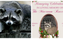 Cork nightclub is hosting a memorial for a racoon that terrorised the local neighbourhood