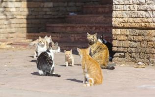 """Australia plans to kill millions of feral cats by """"airdropping sausages laced with poison"""""""
