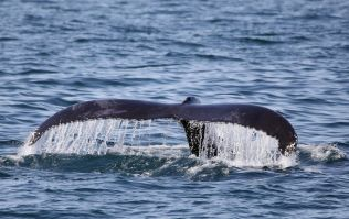 WATCH: The incredible moment a 14-year-old boy came face to face with a whale in Kerry