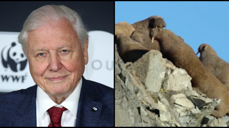 David Attenborough's new nature documentary series on Netflix has left people very emotional