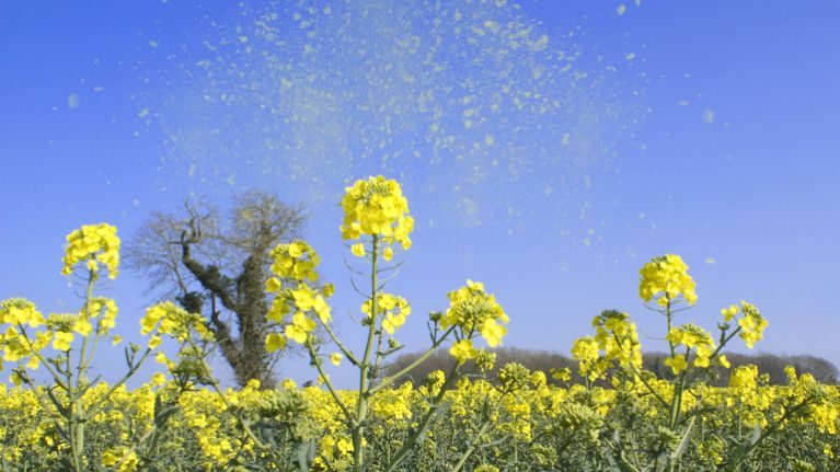 Pharmacists of Ireland issue hayfever warning as pollen count set to rise