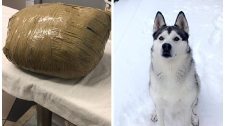 """Irish woman returns from holiday to find pet dog wrapped in """"masking tape"""" by Dublin kennel"""