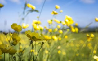 There's plenty of good news on the weather front for the coming week