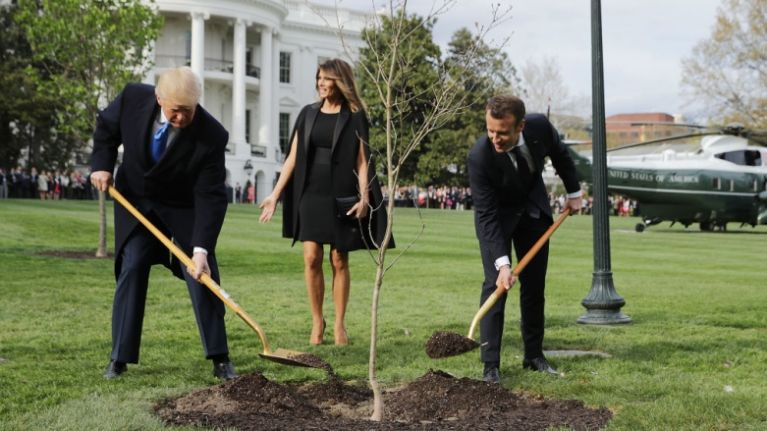 The 'friendship tree' planted by Trump and Macron last year has died