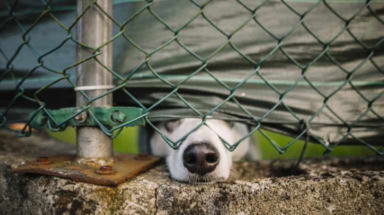 Waterford woman receives lifetime ban on owning any dogs