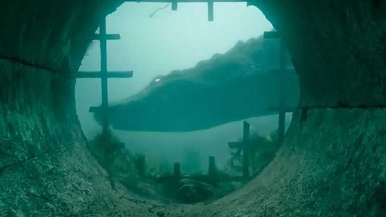 The first reactions are in for Crawl, what looks set to be the sleeper hit of the summer