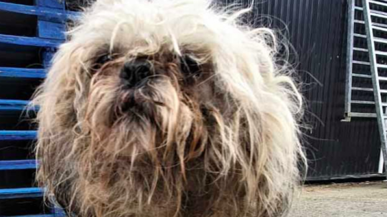 Dog dies after being 'eaten alive' by maggots due to severe neglect in Dublin