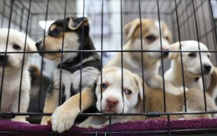 725 dogs put to sleep in Irish pounds last year