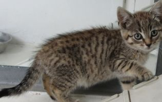 PICS: The ISPCA is appealing for new homes for rescued cats and kittens