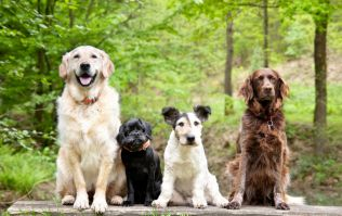 QUIZ: Can you name the breeds of all these dogs?