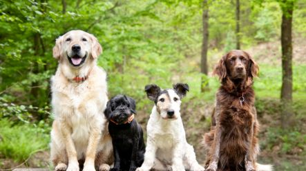 Quiz Can You Name The Breeds Of All These Dogs Joe Is The Voice Of Irish People At Home And Abroad