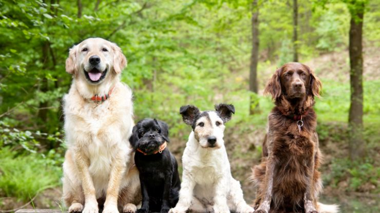Job will pay you €1,500 per month to look after some very good dogs