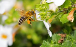 Deliveroo are giving out free honeybee survival kits when you order from these restaurants
