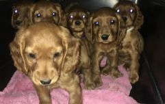 Six puppies found hidden in van at Dublin Port