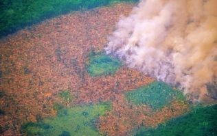 Brazil's Amazon rainforest is burning at a record rate, experts say