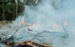 Amazon fires are man-made, experts have said