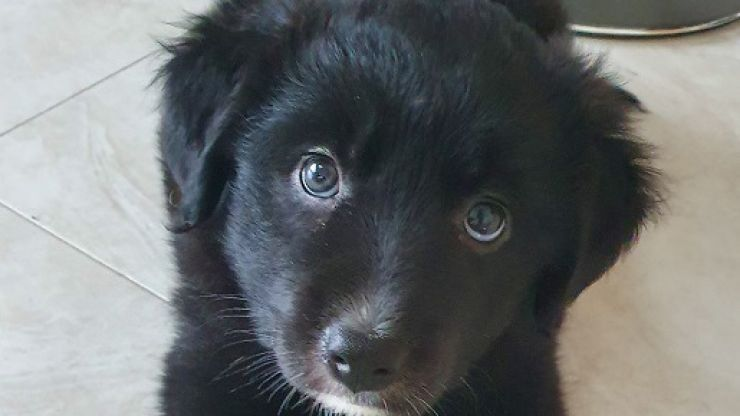 Six newborn puppies rescued in Longford