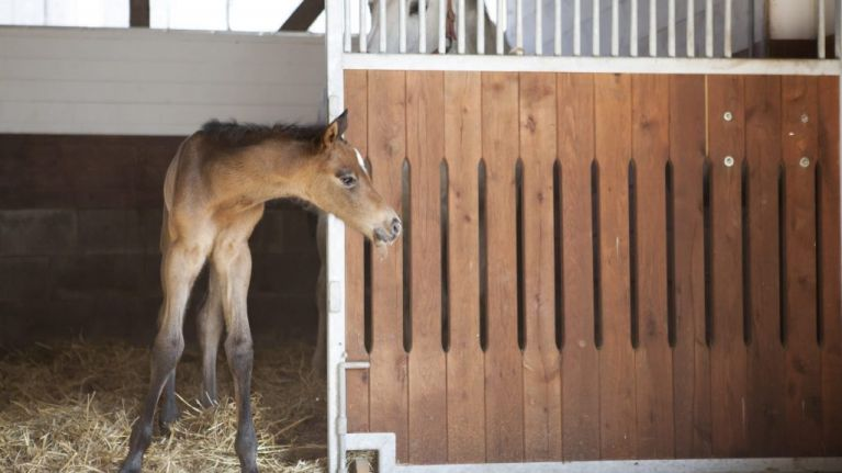 Dead baby foal found roadside by DSPCA in Dublin