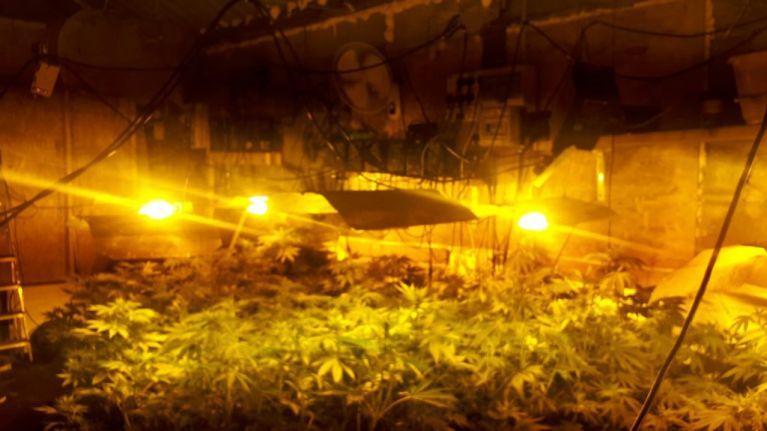Gardaí share images of €90,000 worth of cannabis found in Limerick