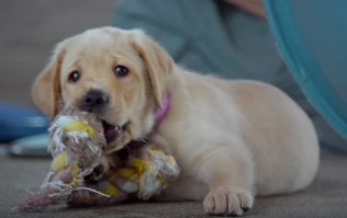 Netflix have added an excellent documentary about puppies training to become guide dogs
