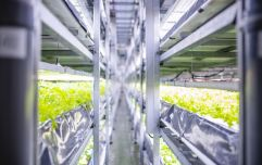 'Stacks of snooker tables in a tower': Why vertical farms are the future of food production
