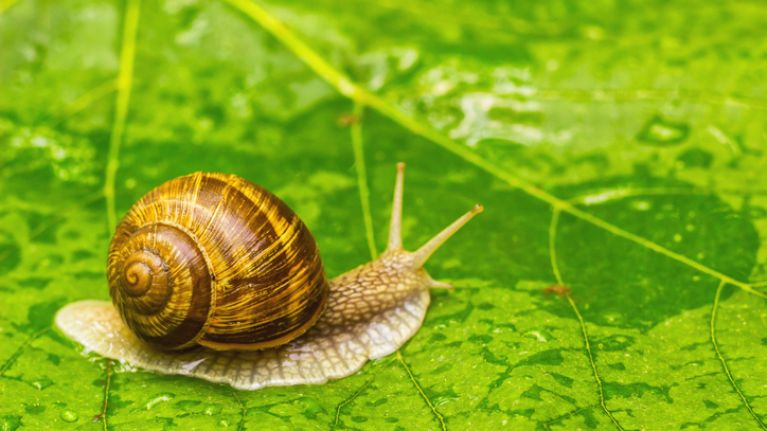 World's loneliest snail, Lonely George, has died — leaving his species extinct